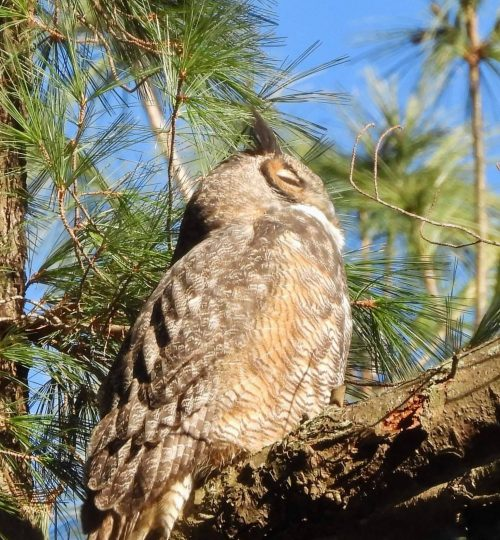 owl 14